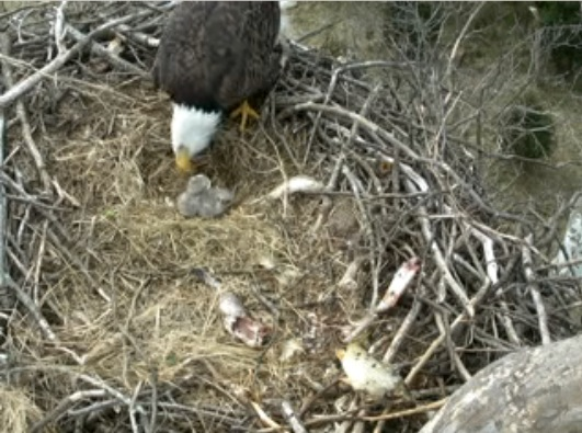 More feeding with Mom. March 16, 2012. 1pm EST.