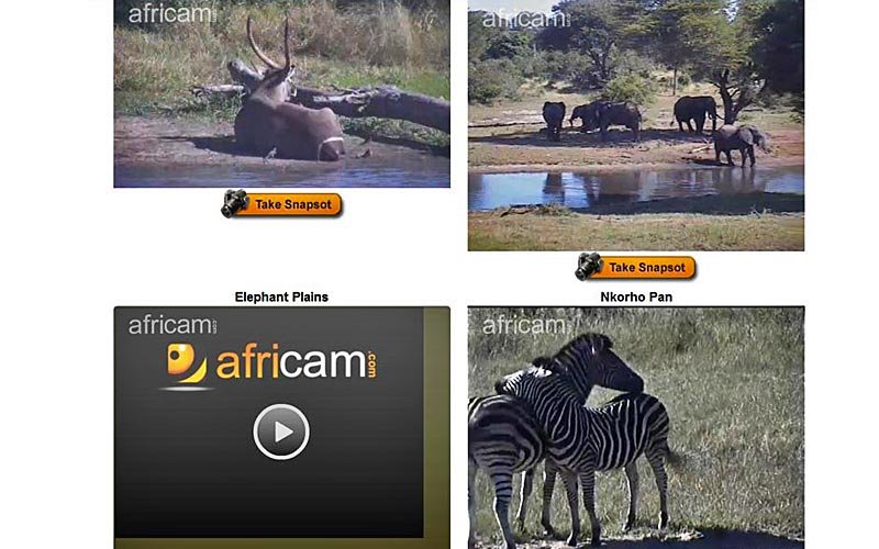Africam on OutdoorChannel.com has four live streams showing wildlife at nature preserves in South Africa.
