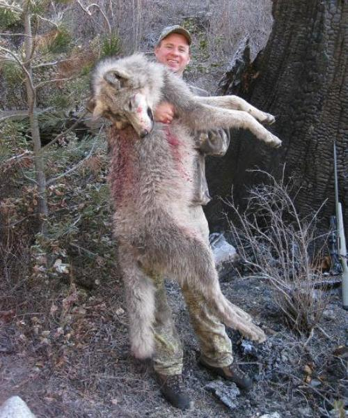 Jason Carter with his Idaho wolf, which he said was hunted where elk were wintering. He advises to hunt in fresh snow and wolves won't be far from tracks, but you'll need luck and a long-range gun. (Courtesy Ridge Reaper)